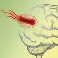 Причины, симптомы, лечение и профилактика менингита - лечение и профилактика