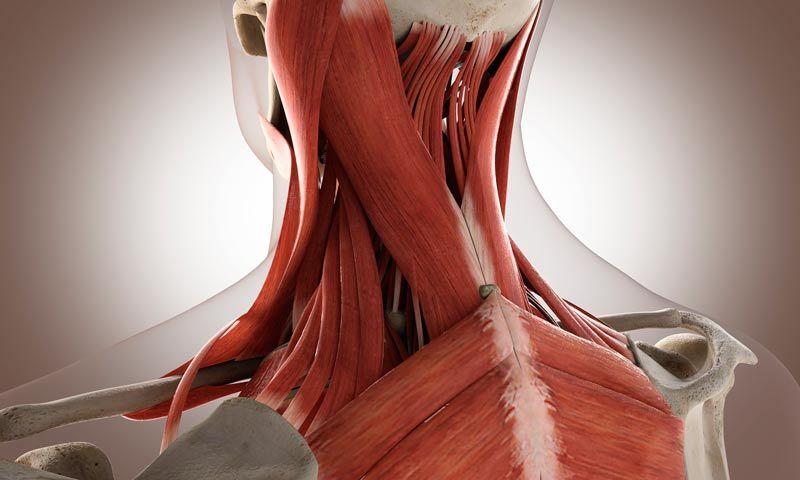 боль в мышцах шеи