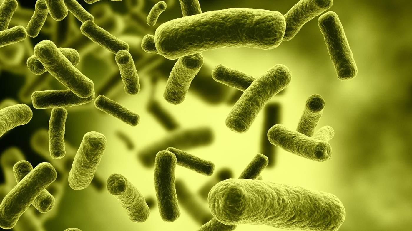 kishechnye-bakterii-mogut-predotvratit-insult