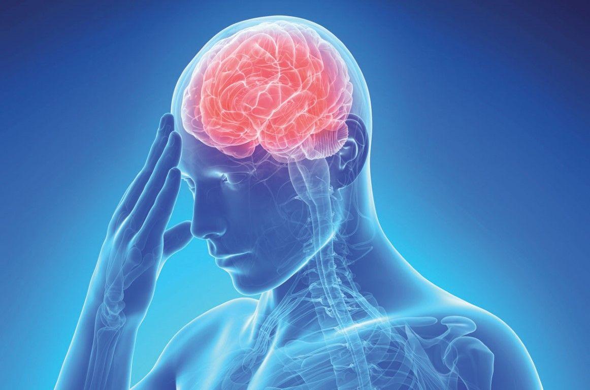 Стволовые клетки могут восстановить мозг после инсульта